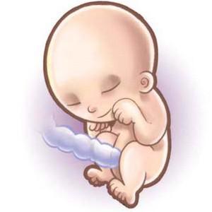 21 неделя беременности - что просиходит покажет УЗИ