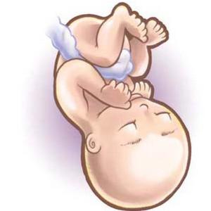 29 неделя беременности, что происходит в развитии плода?