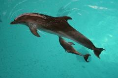 Московский дельфинарий. Отзывы посетителей.