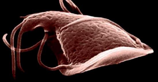 Средства от паразитов гельмифаг