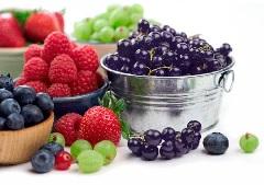 Правила введения ягодного прикорма