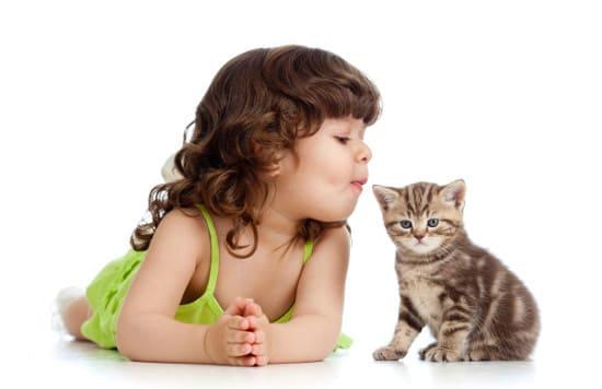 Ребенок принес домой котенка. Что делать родителям?